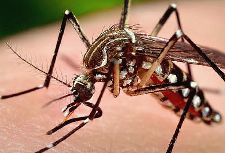 Комары - основной источник распространения вируса Западного Нила
