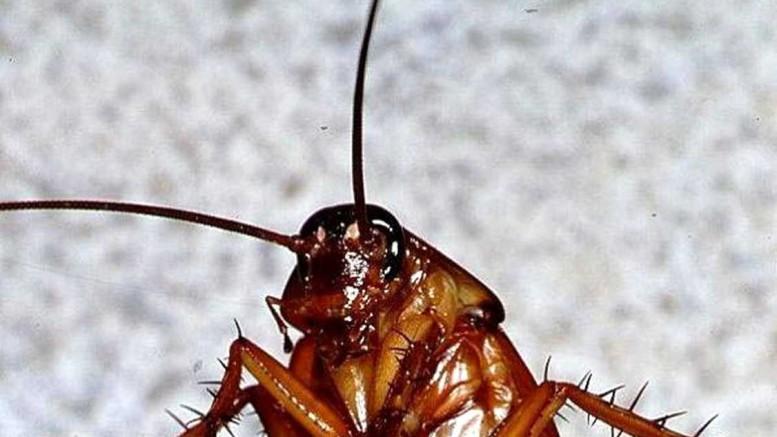 Тараканы в квартире
